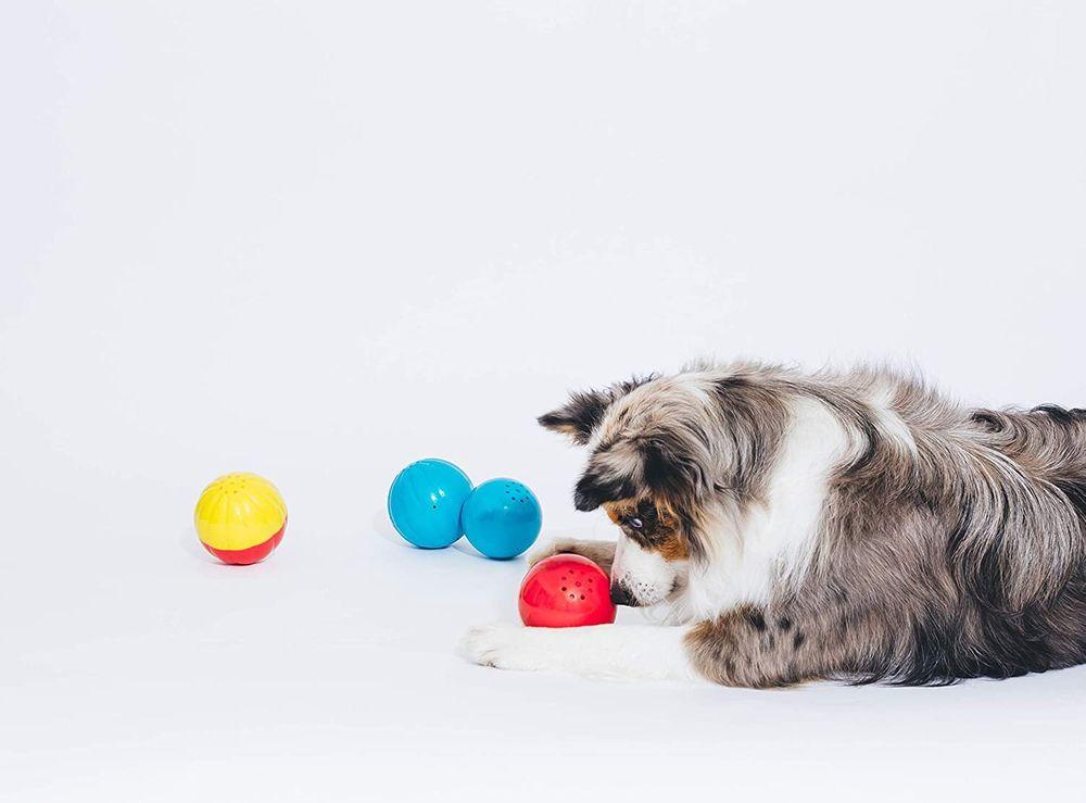 Заказать качественные игрушки для собак